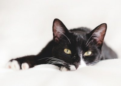 cute black and white cat lying on a white blanket